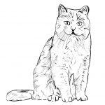 kat schets a5 printen